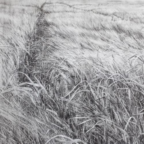 Swaying- Charcoal on Paper 126x2110cm