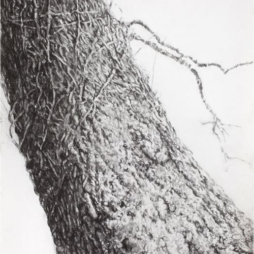 Trunk- Charcoal on Paper 81x60cm