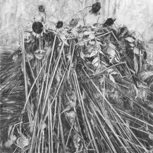 Harvest- Charcoal on Paper 124x99cm