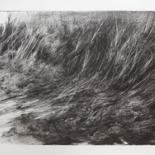 Susurrate II- Charcoal on Paper 80x121cm
